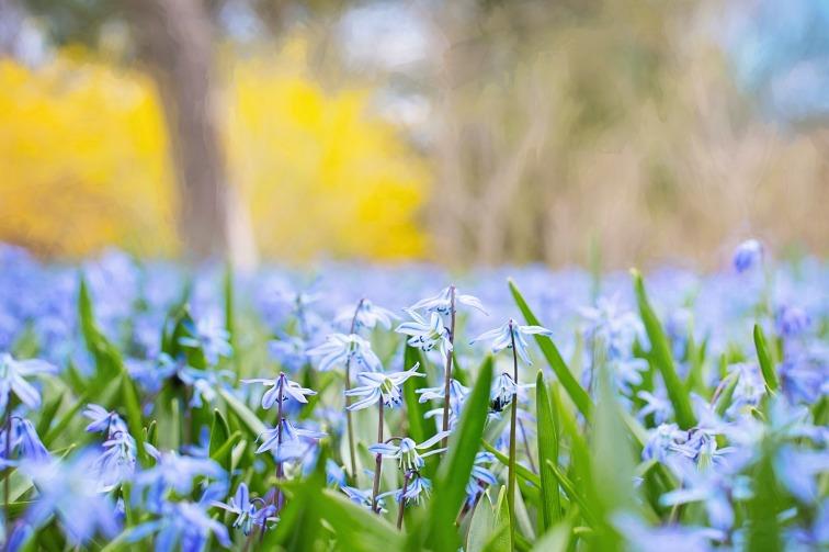 spring-flowers-741965_1920